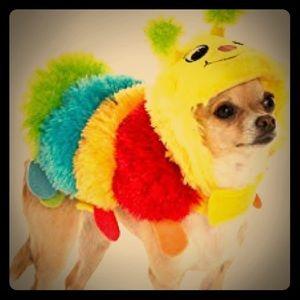 Caterpillar Doggy Costume! 🐛